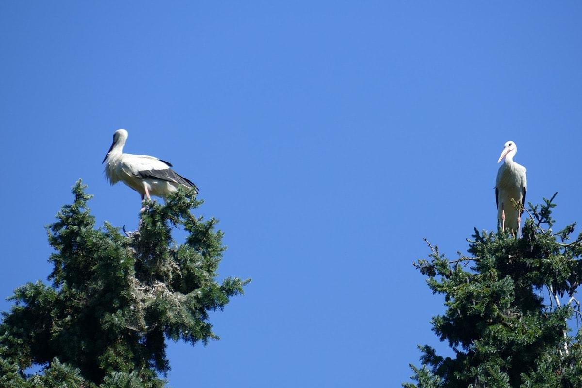 stork-couple-1535941_1200-min